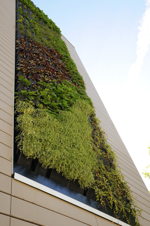 Mur vegetale exterieur fabriquer mur vegetal interieur mur vegetale interieur et exterieur avec - Fabriquer un mur vegetal ...