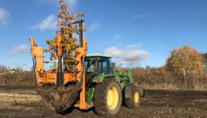 Transplanter des végétaux en paysage