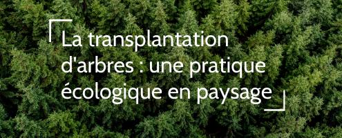 Transplanter arbres et arbustes